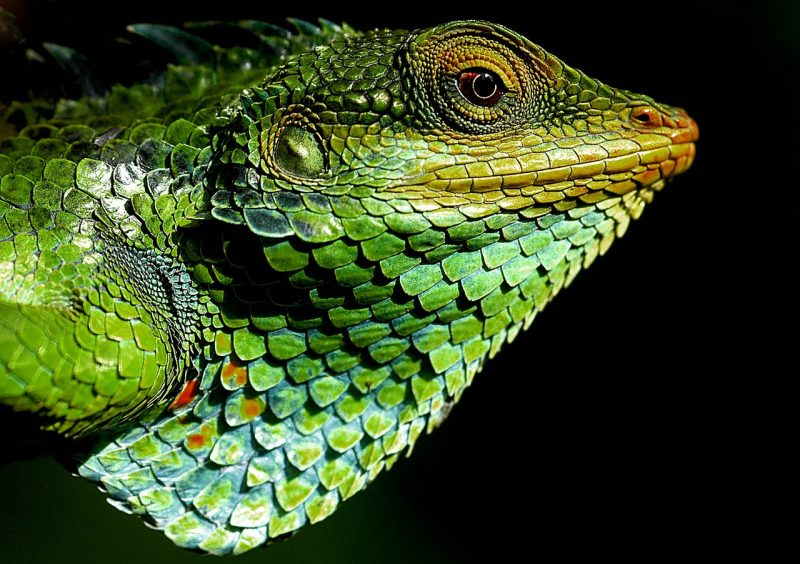 Are you a chameleon leader?